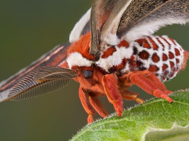 Pin Von Almudena Alonso Auf Insekten Insekten Schmetterlinge Arten Nachtfalter