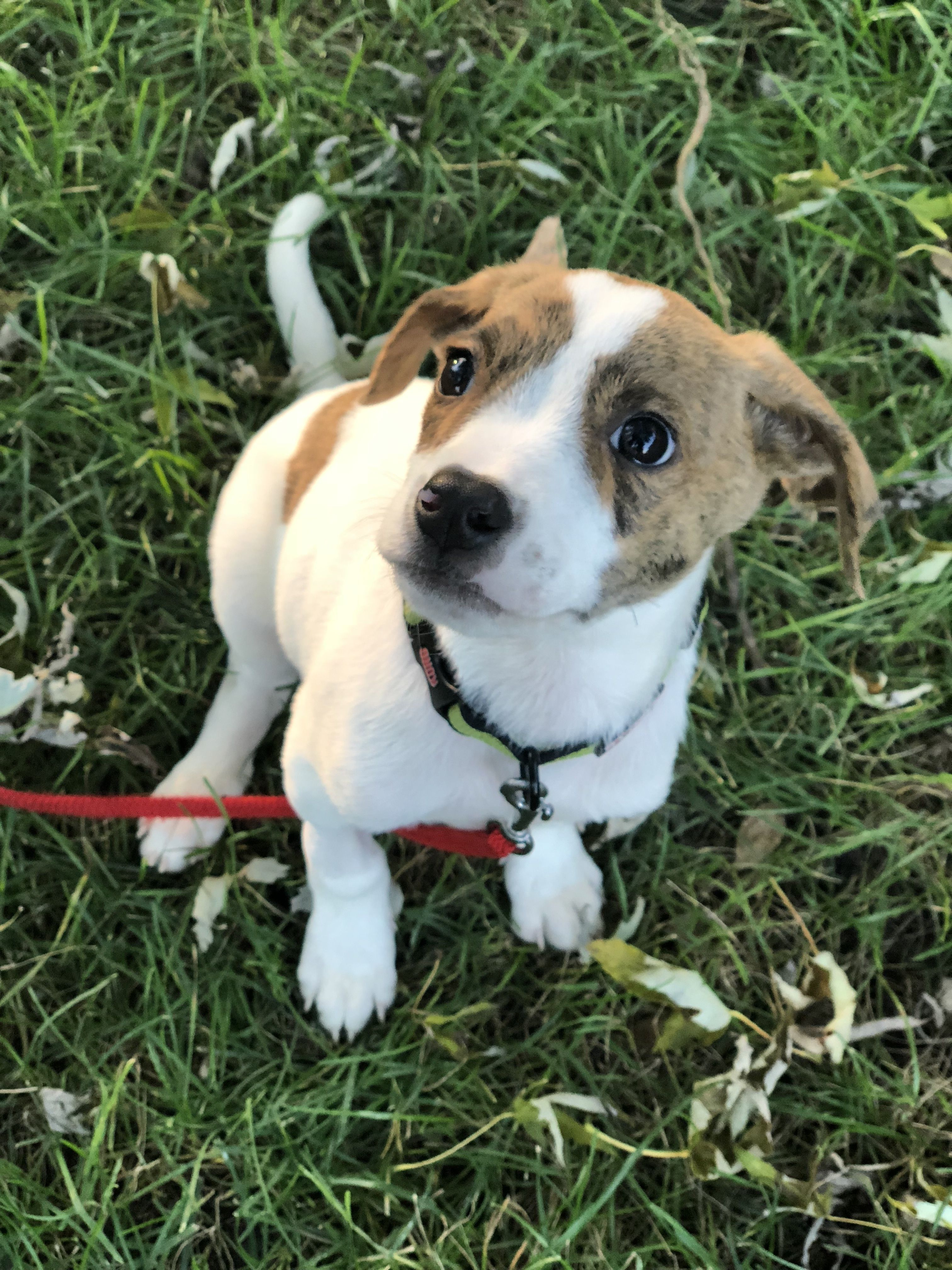 Adopt Wilbur on Dogs, Animal rescue, Pets