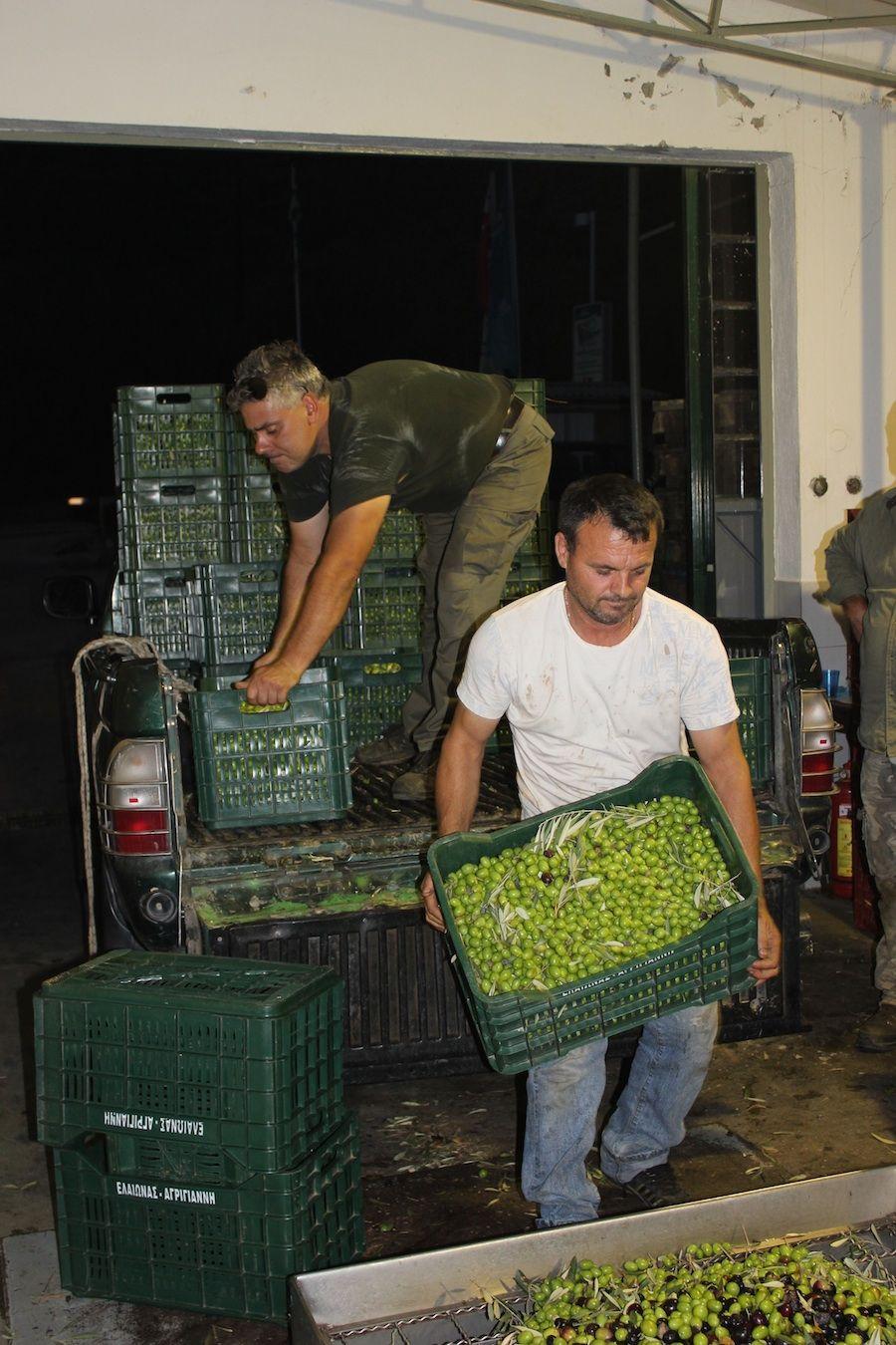 Guter Stoff: Durch viele Hände gehen die Bio-Oliven,…