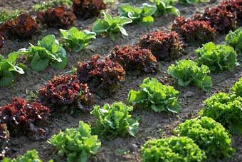 Lovely Organic Gardening Pros Cons