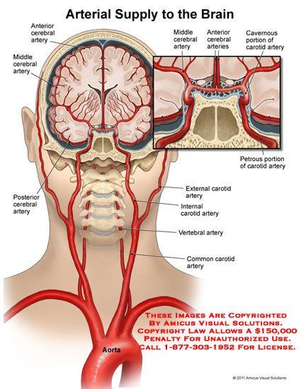 no description available)   NEUROLOGY   Pinterest   Brain, Anatomy ...