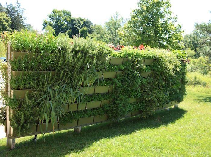 Brise-vue végétal – cachez au naturel