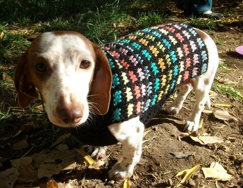 Crochet Dog Sweater Pattern Yahoo Image Search Results Perros