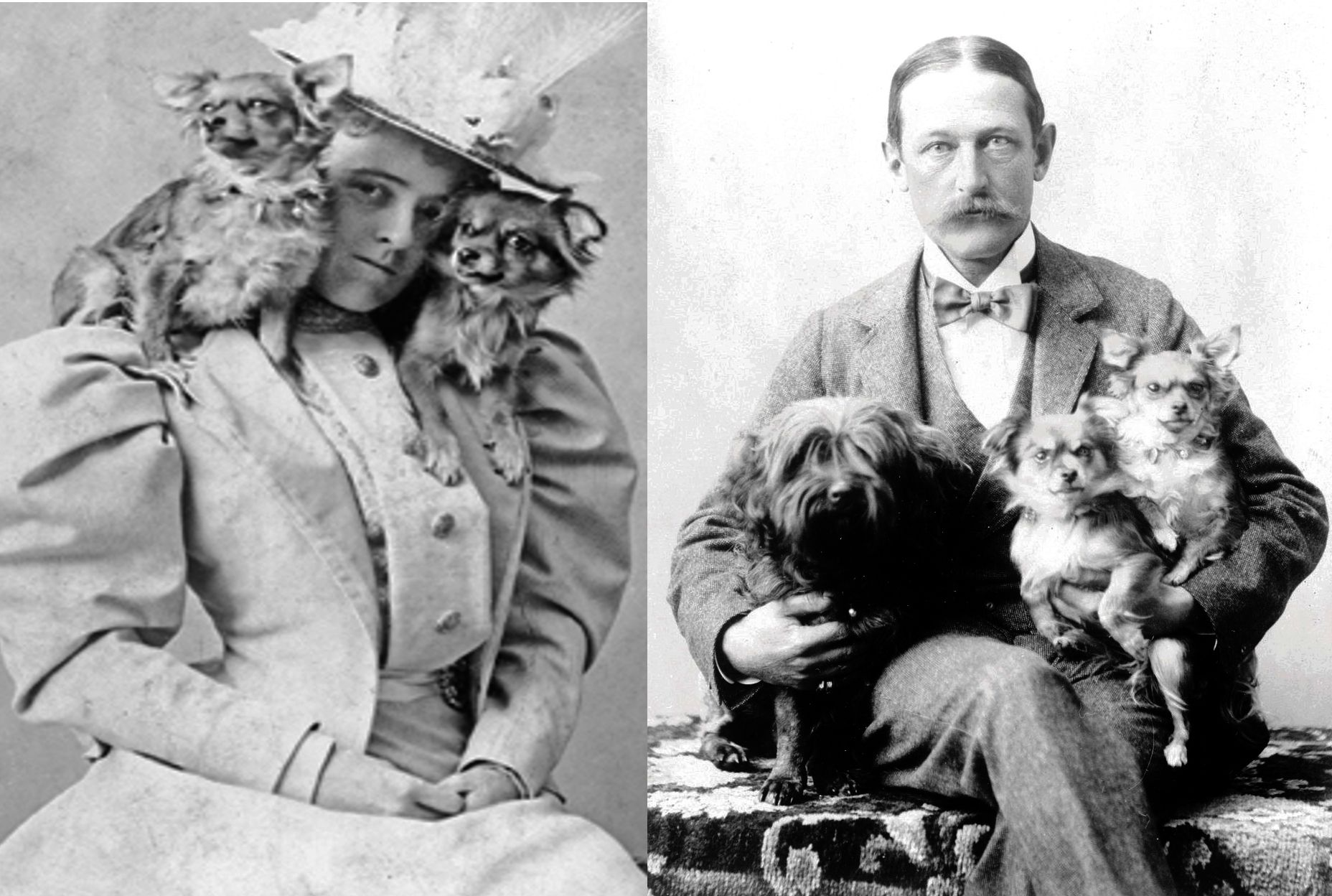 29th of April 1885, Edith Wharton, author of The House of Mirth, married Edward Robbins Wharton. It was passionless marriage made bearable by her dogs, Mimi and Miza, and Edward's dog, Jules.