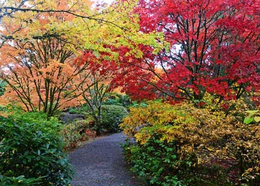 Seattle Fall Colors | Fall Color At The Yao Japanese Garden In The Bellevue Botanical  Garden