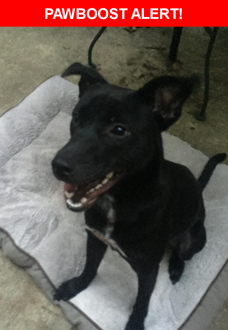 Is this your lost pet? Found in Greenville, SC 29615. Please spread the word so we can find the owner!  Description: 6-7month old female  Nearest Address: Crescent Ridge Drive, Greenville, SC, United States