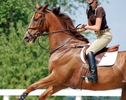 Would love a horse.