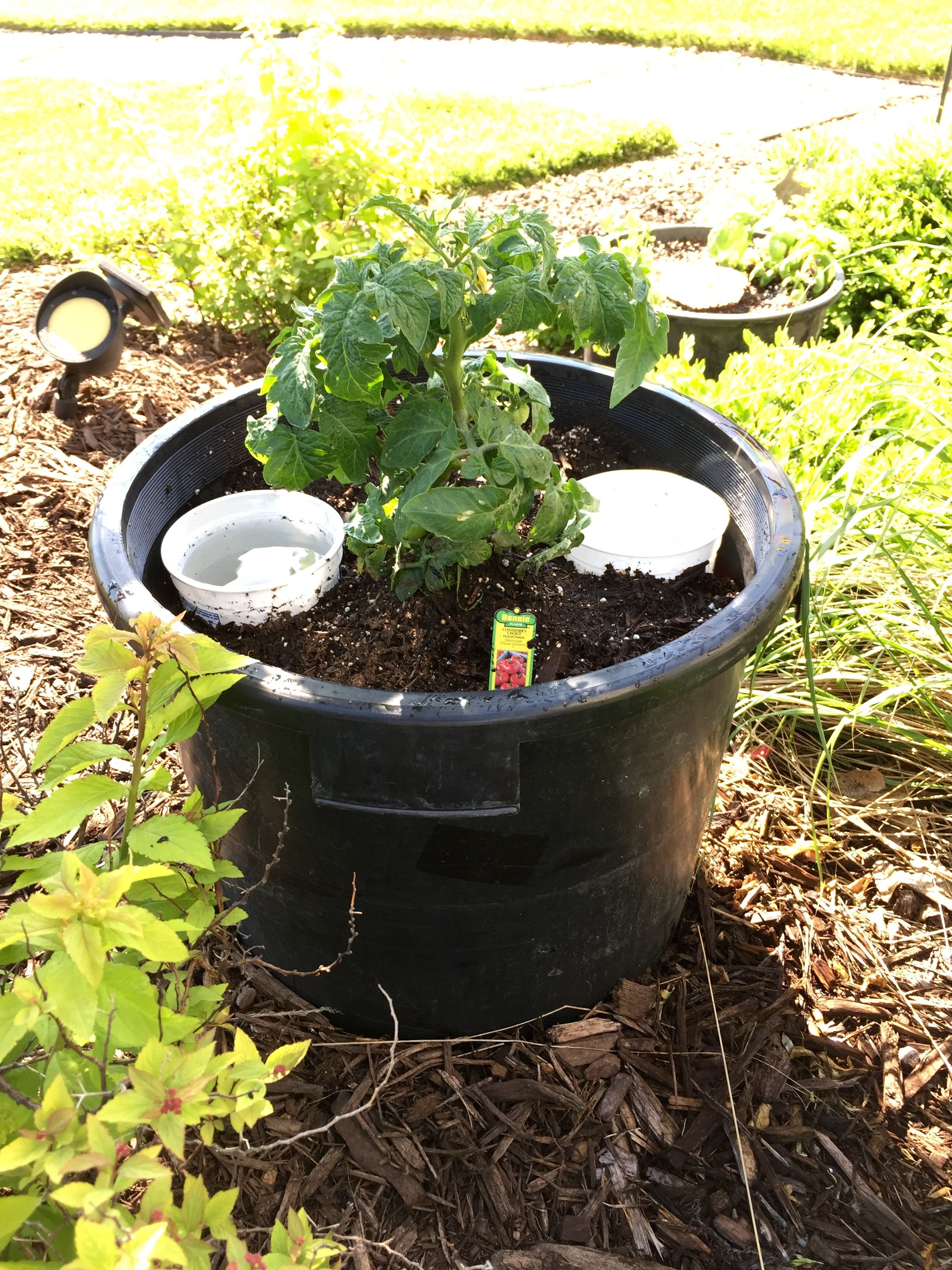 Container gardening, Bonnie plants