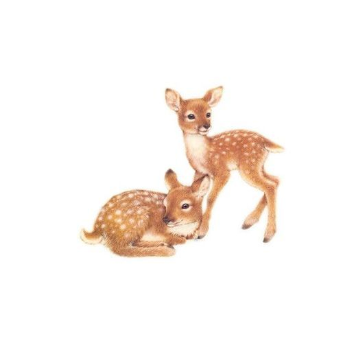 sweet cute lovely bambi art draw
