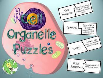 Cell Organelle Puzzles By Make Them Think Teachers Pay Teachers Science Teaching Resources Science Cells 6th Grade Science