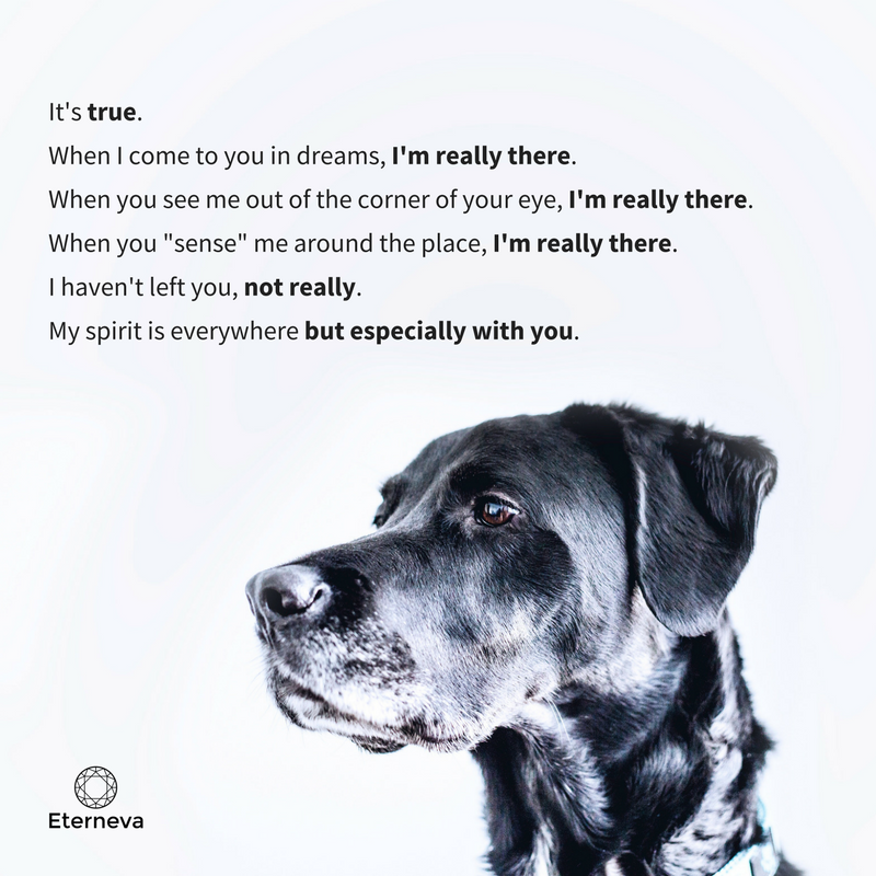 A dog memorial quote that will resonate with all pup parents ...