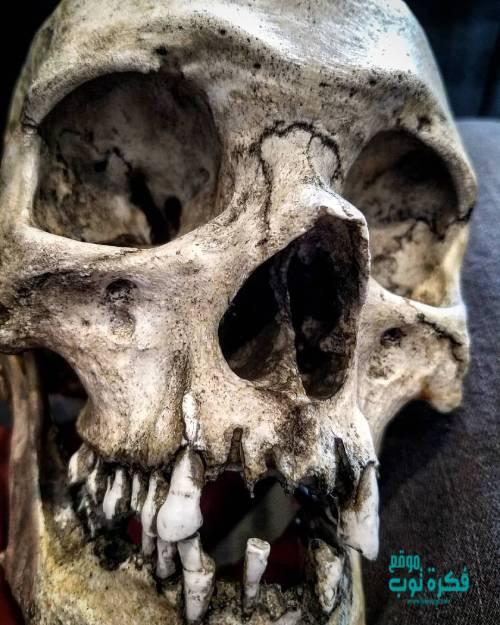 صور جماجم مرعبة جدا 2019 خلفيات جماجم نارية كيوت ملونه Hd 7 Skull Skull Artwork Skulls Drawing