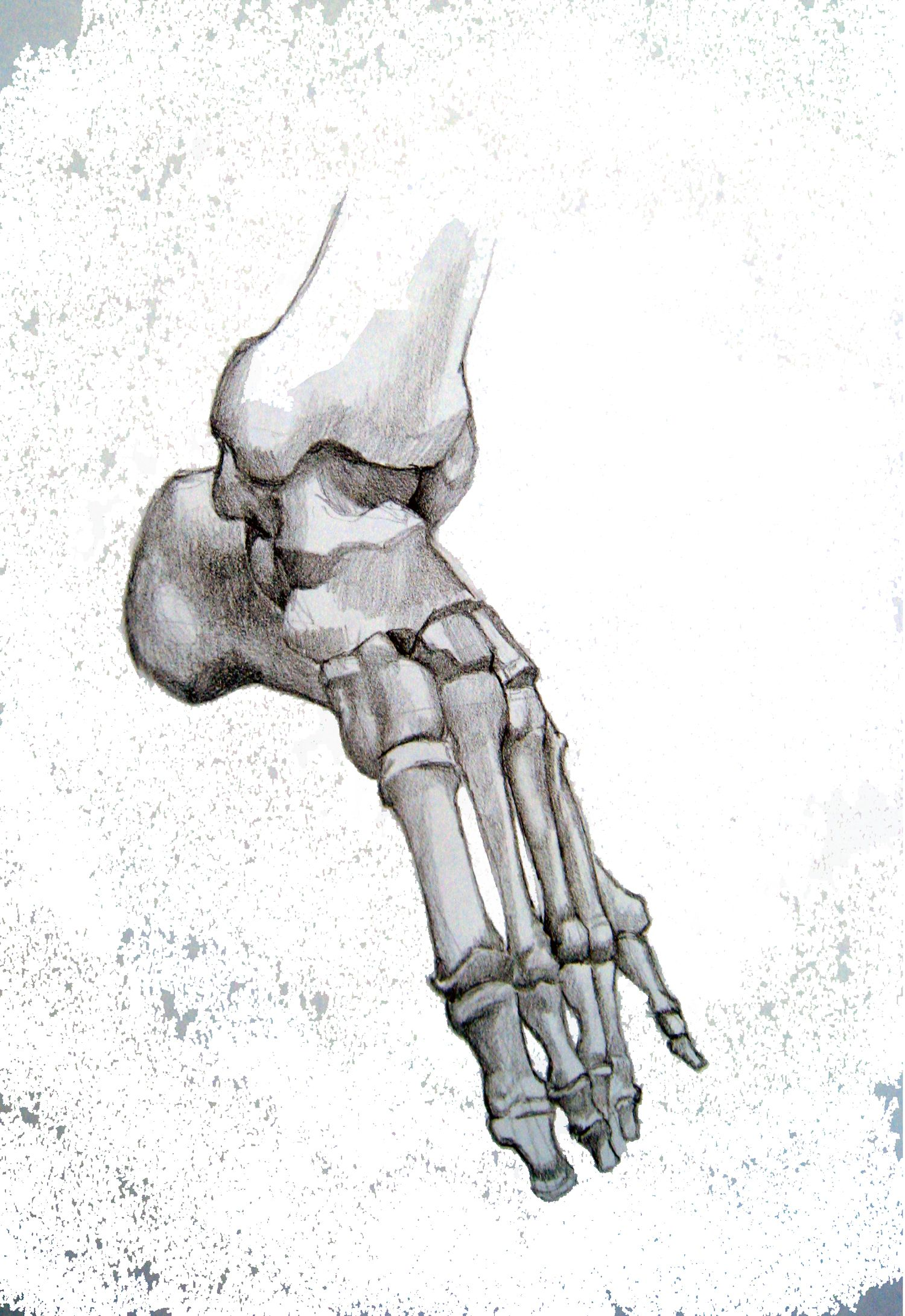 Image result for foot bones  illustration pen ink