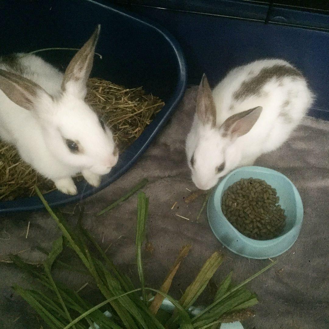 Bunny Rabbit Bunnyoftheday Bunnyofinstagram Bonding Rabbits Rabbitoftheday Rabbitsofinstagram Pet Petcare Petcare Foster Animals Pet Care Pocket Pet