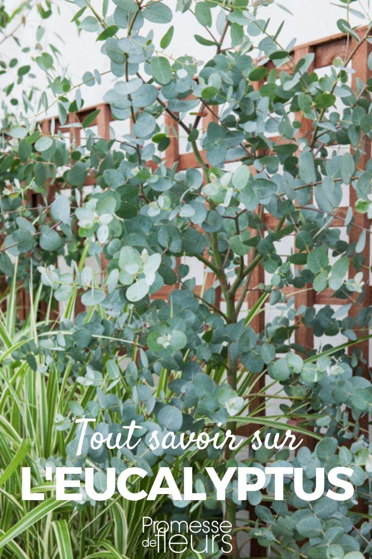 Epingle Sur Jardin Contemporain Amenagement