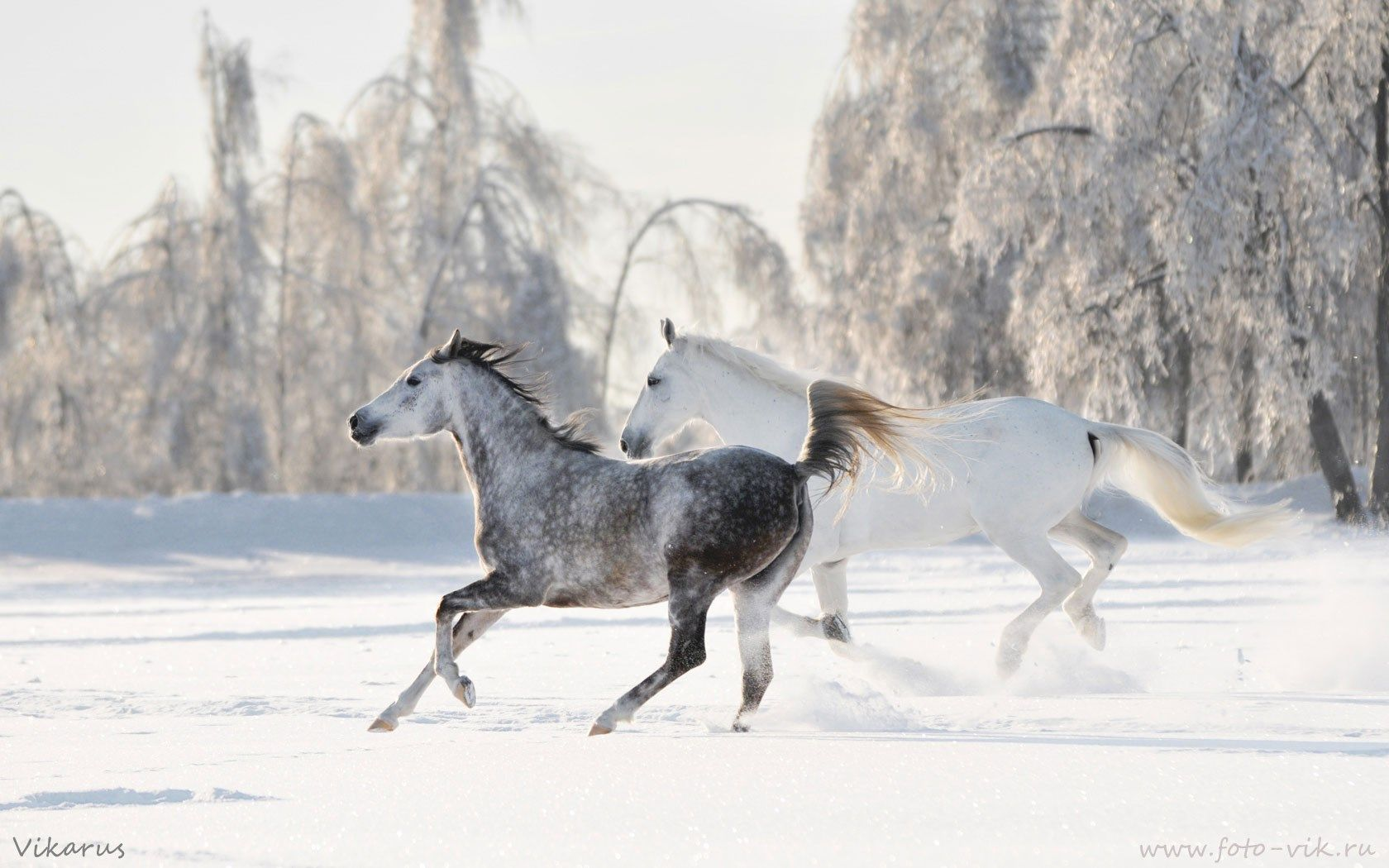 Top Wallpaper Horse Winter - 8ab4950b88f470795eef891c85b127cc  Graphic_394274.jpg