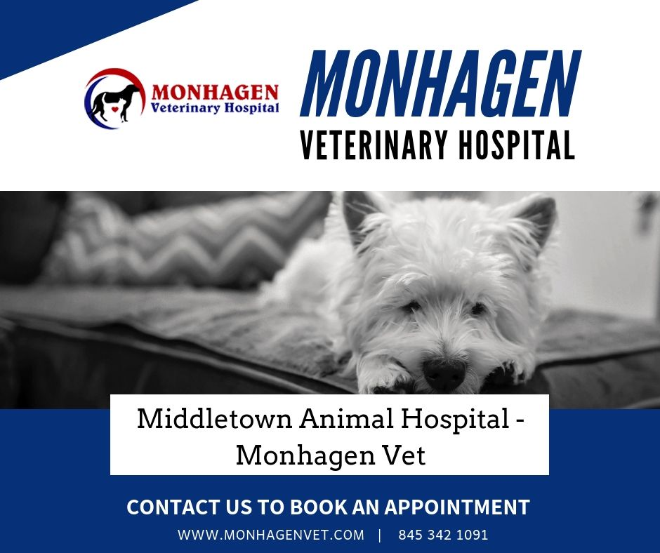Monhagen Animal Hospital Is Full Service Veterinary Medical
