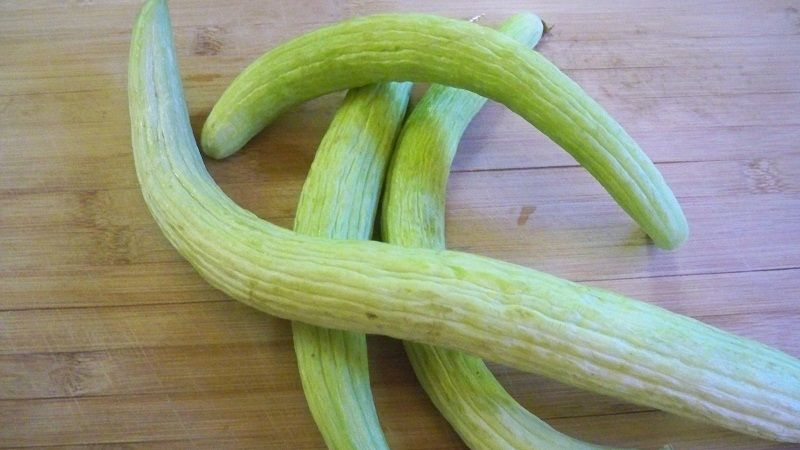 الفقوس Fruit Vegetables Celery