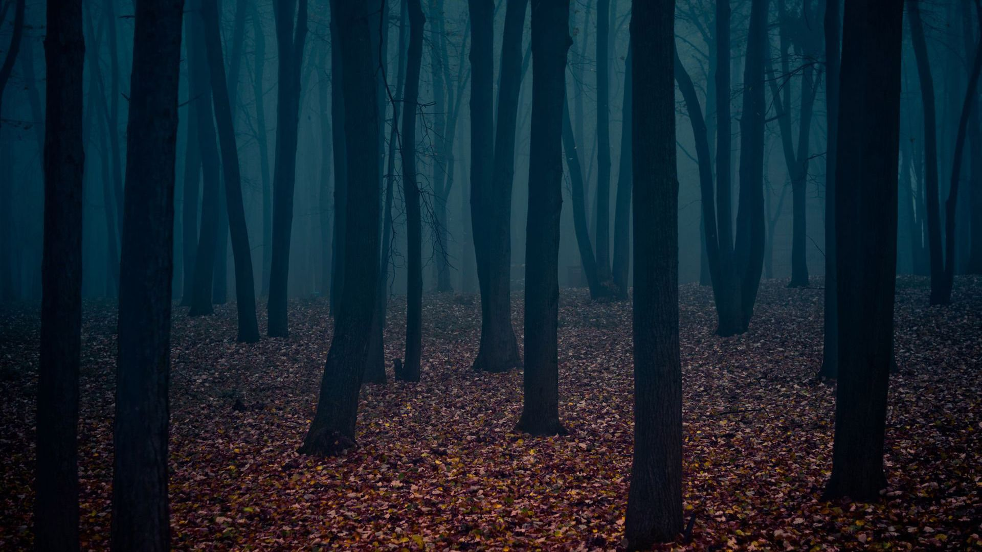 cool forest backgrounds. vd8ldiljpg 19201200 paisagens pinterest dark forest wallpaper and backgrounds cool