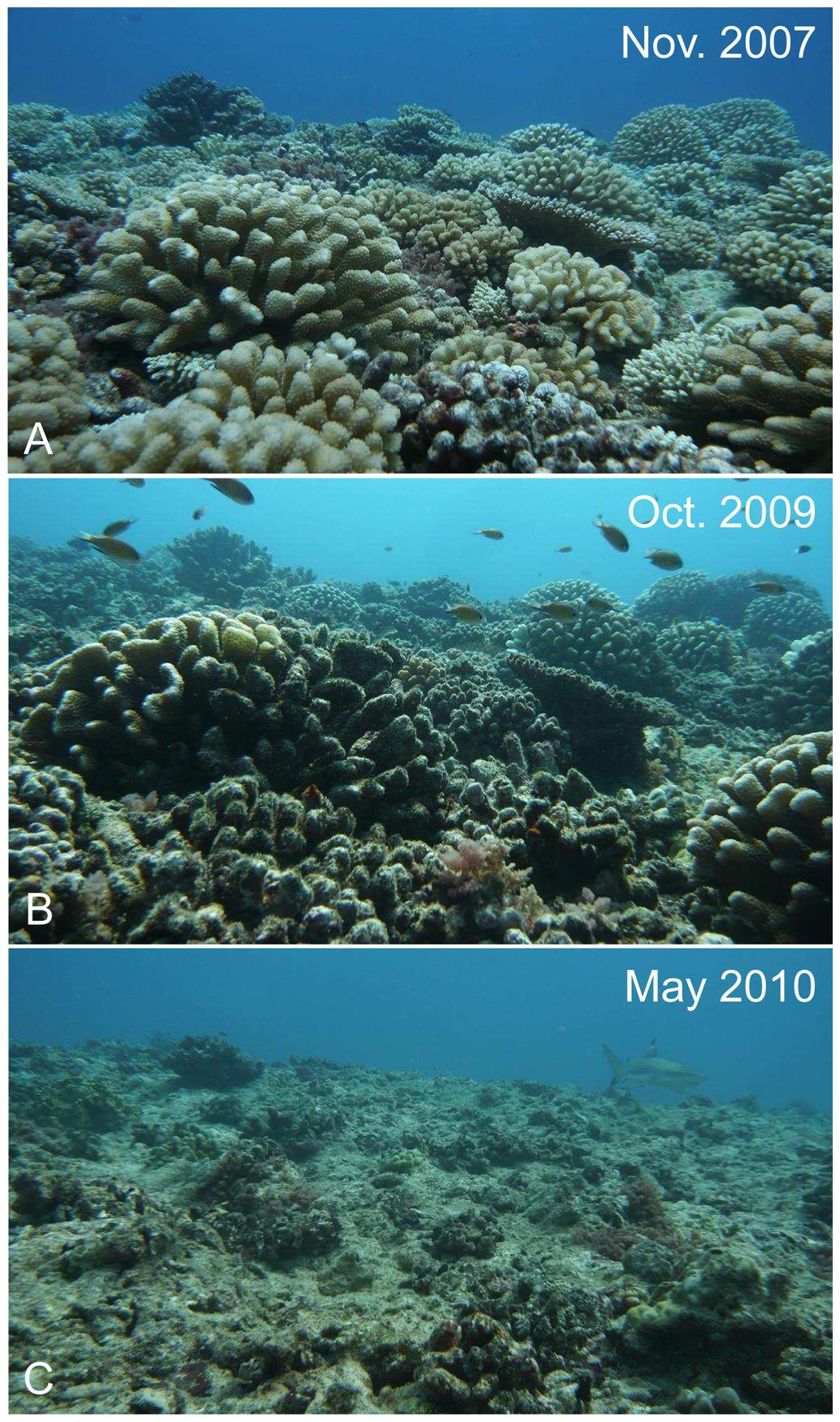 Before And After Of The Great Barrier Reef