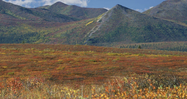 Tundra (With images) Tundra, Habitats, Nature