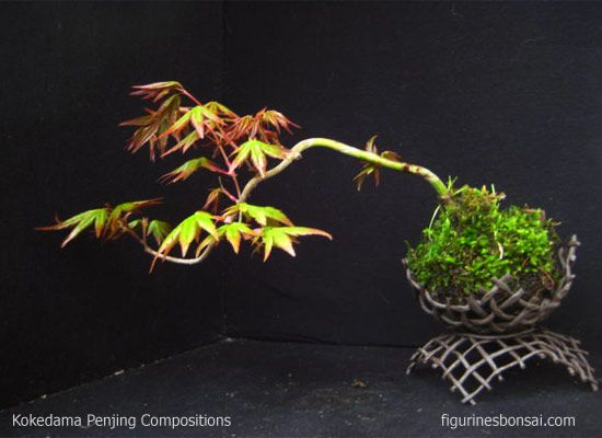 A most interesting pot!! Momji, Japanese maple. Link; Kokedama & Penjing compositions
