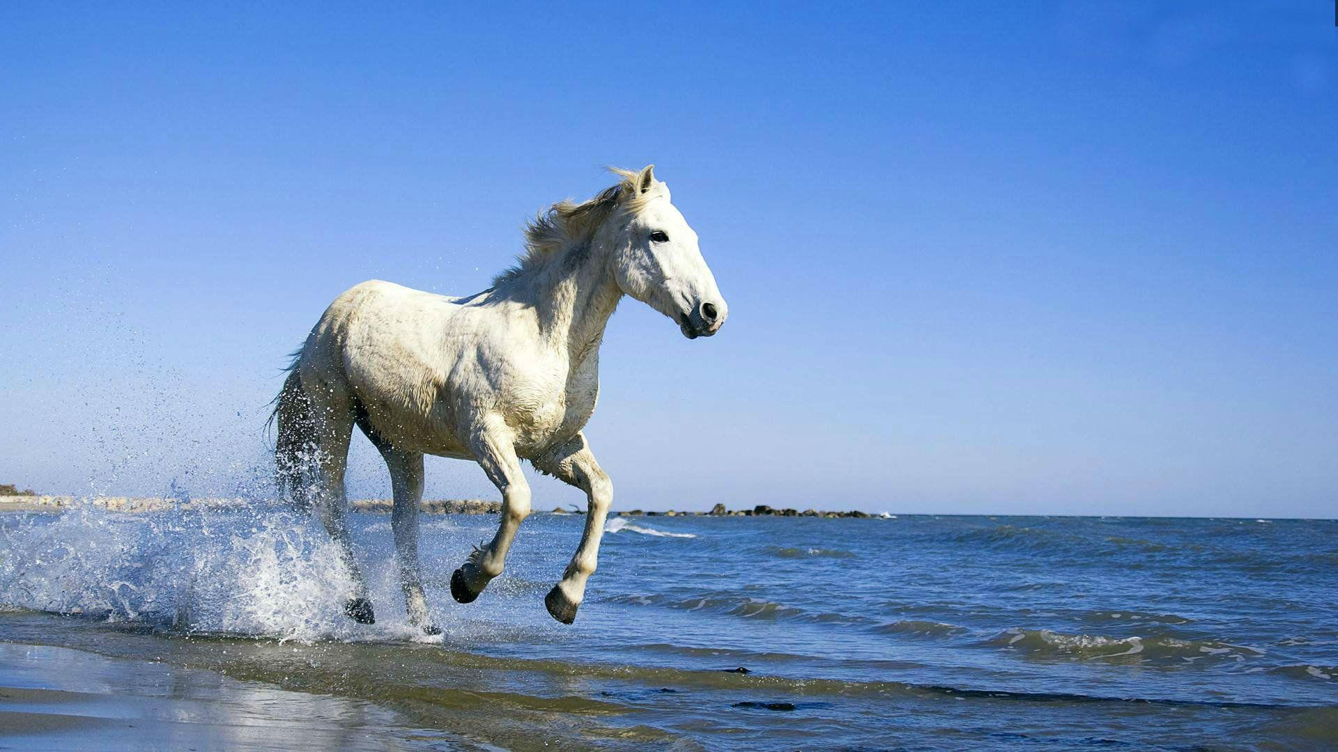 Running Horse Wallpaper Free Download Horse Wallpaper Camargue Horse Horses