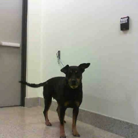 Miami Fl 12 20 16 Aya Still Waiting For Someone To Come