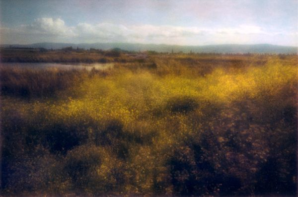 Erin Malone :: from the Alviso Project