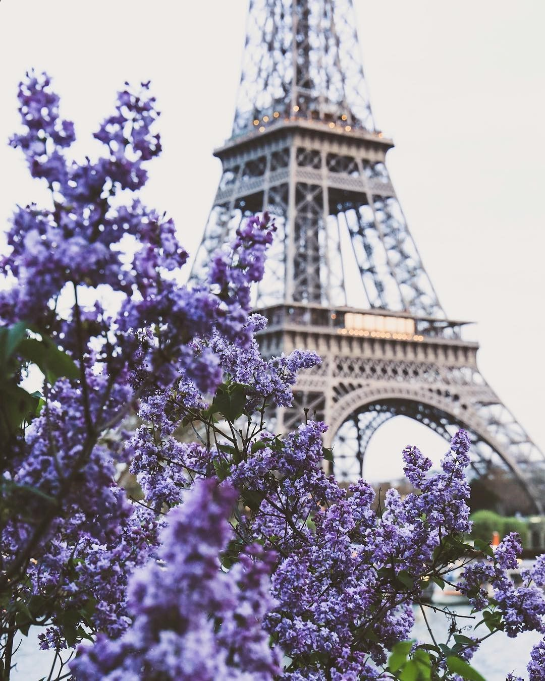 Paris Eiffel Tower And Purple Flowers. Dreamy Shot