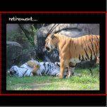 Funny Retirement Card, sleeping tiger | Zazzle