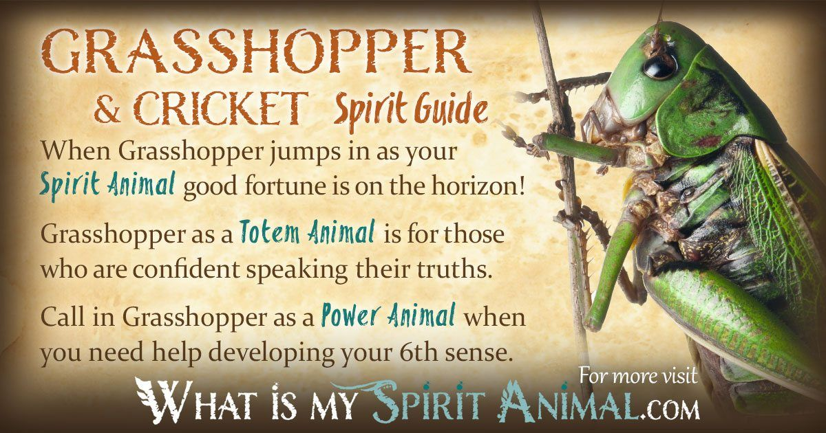 Cricket Grasshopper Symbolism Meaning Spirit Totem Power Animal Animal Totem Spirit Guides Spirit Animal Totem Spirit Guides