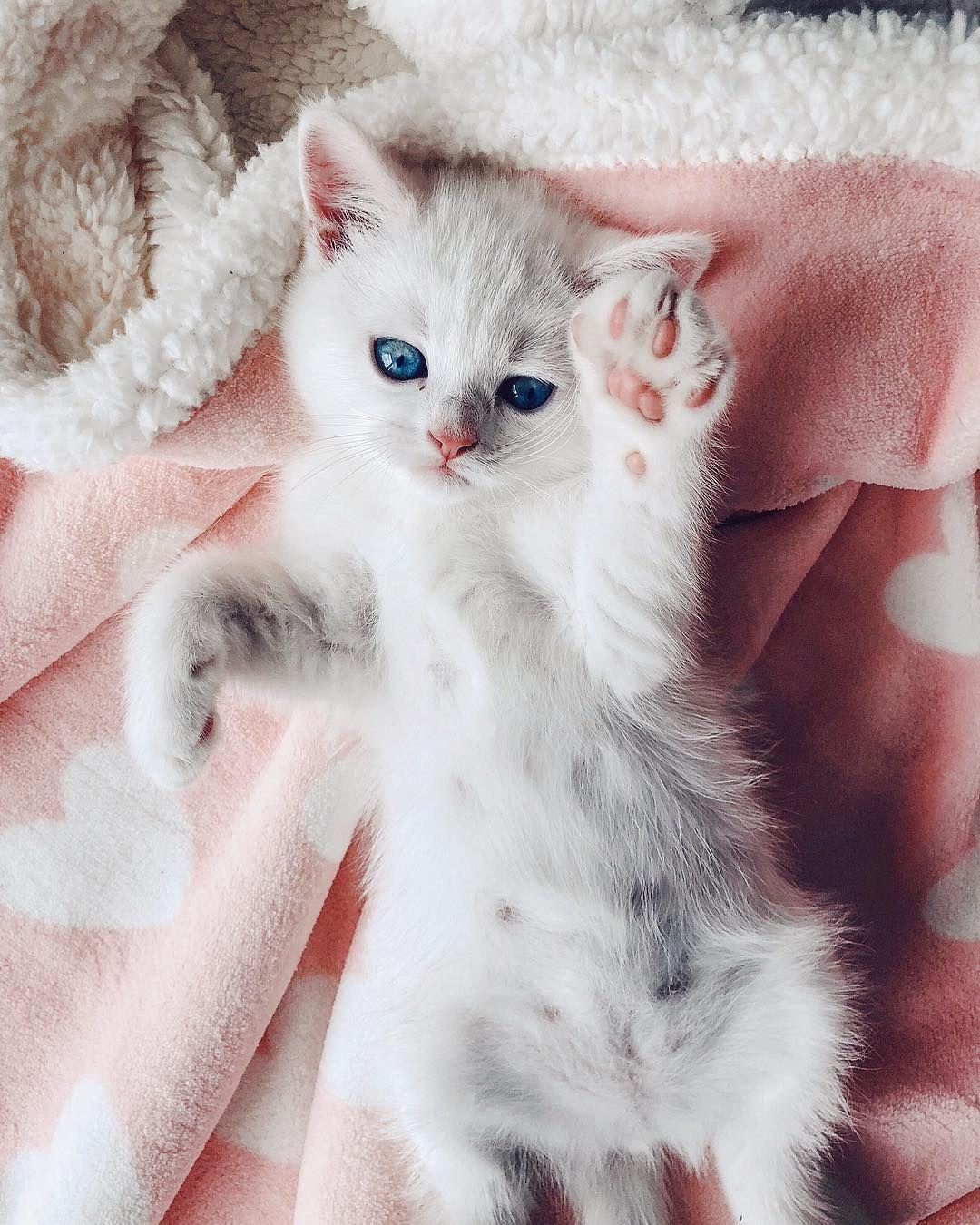 Such An Beautiful Angel Kitten Kittens Cutest Baby Cats Cute Animals