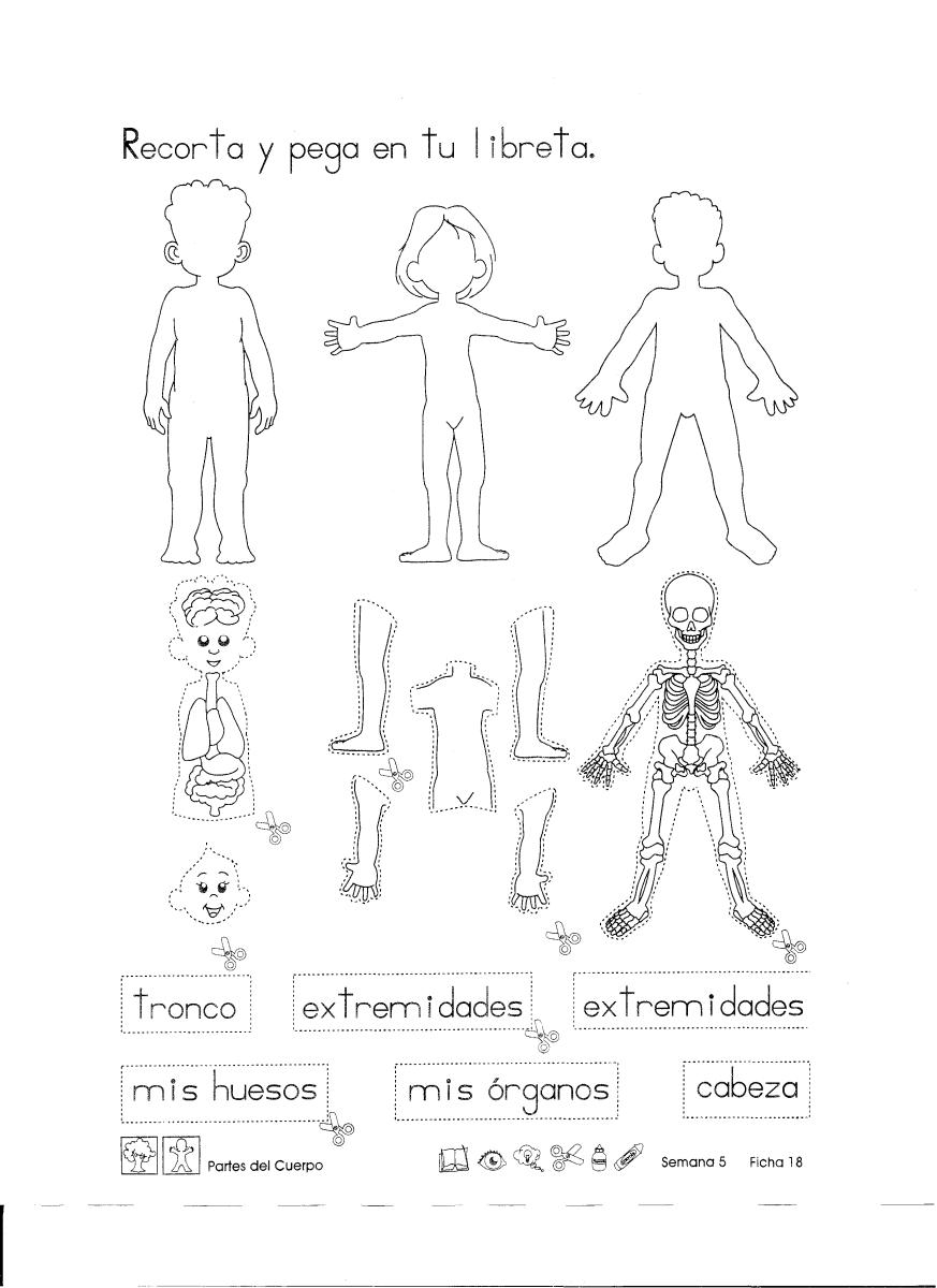 Partes del cuerpo: Recortables 1er Grado … | Cuerpo humano | Pinte…