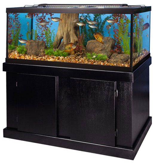 Marineland 75 Gal Majesty Aquarium Ensemble Review
