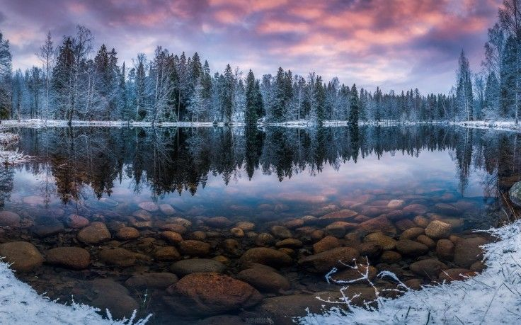Pine Trees Covered With Snow Hd Wallpaper Winter Wallpaper Desktop Forest Wallpaper Winter Desktop Background