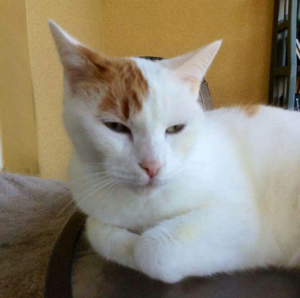 Tyrael Cats Feline Kittens