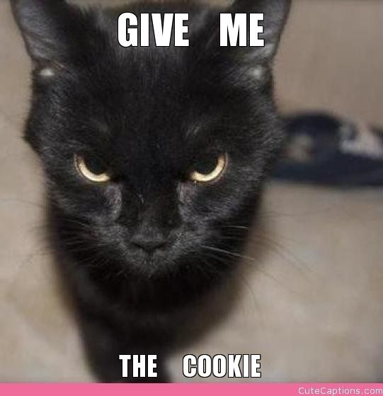 Cute Cats with Funny Captions | give-me-the--cookie.jpg ...