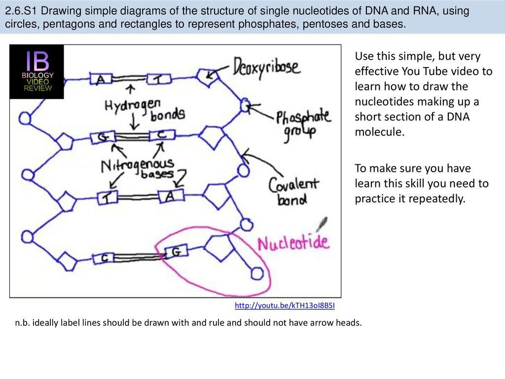 Dna Structure Worksheet Answers Label The Diagrams Dna