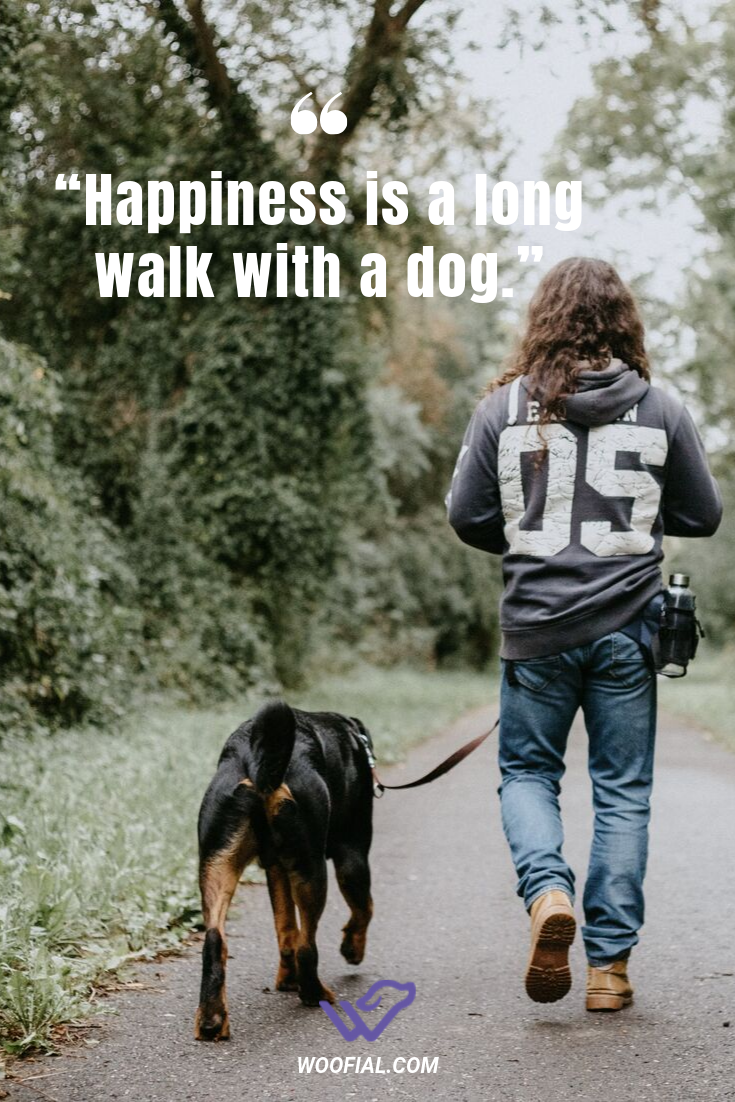 Happiness Is A Long Walk With A Dog Dog Dogs Dogfunny Funnydogs Dogmemes Doglover Doglovers Doggo Cute Puppy Doglifest Dog Quotes Dog Meet Dog Memes