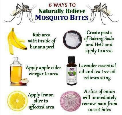 6 ways to naturally heal mosquito bites | DIY Health