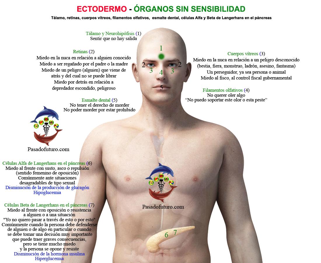 Nueva Medicina Germanica Hamer Ectodermo NMG Leyes Biologicas ...