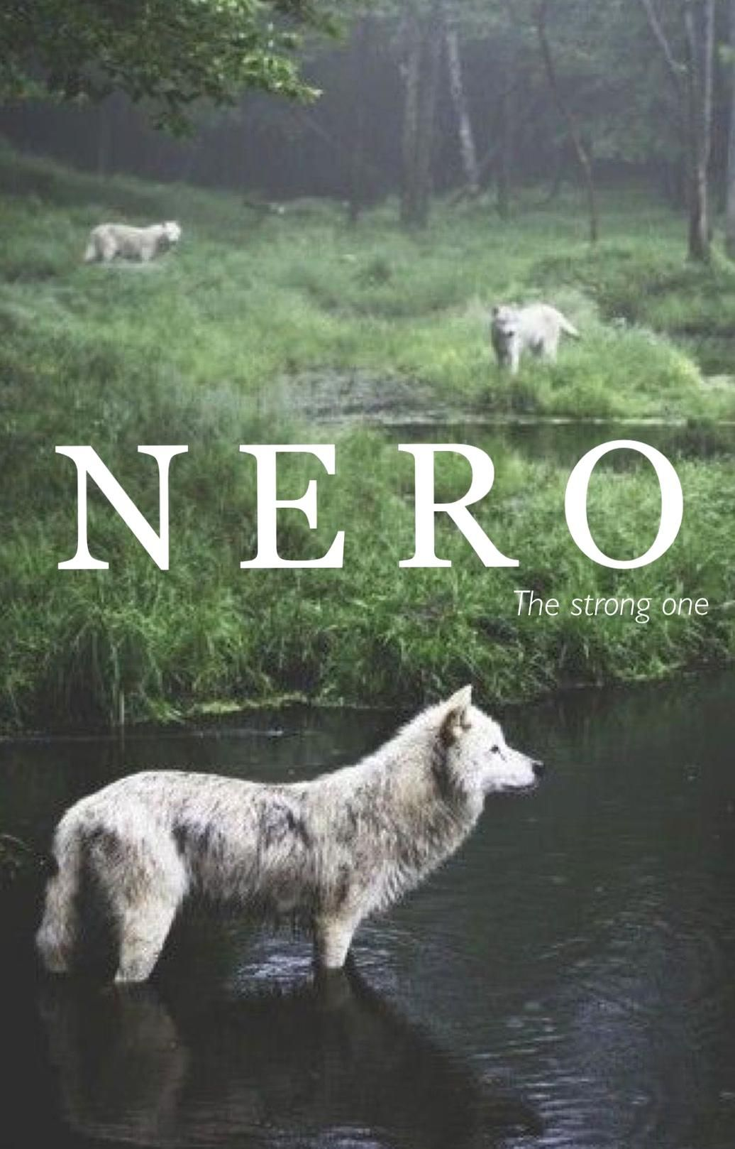 Nero Old Norse Names Strong One Vintage Baby Names Strong Male Names Baby Boy Names Unique Baby Names N Baby Boy Names M In 2020 Animals Animals Wild Animals Beautiful