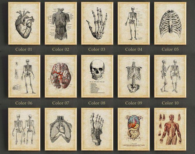 Human Anatomy Antique Art Print Set of 12 - Vintage Anatomy Home ...