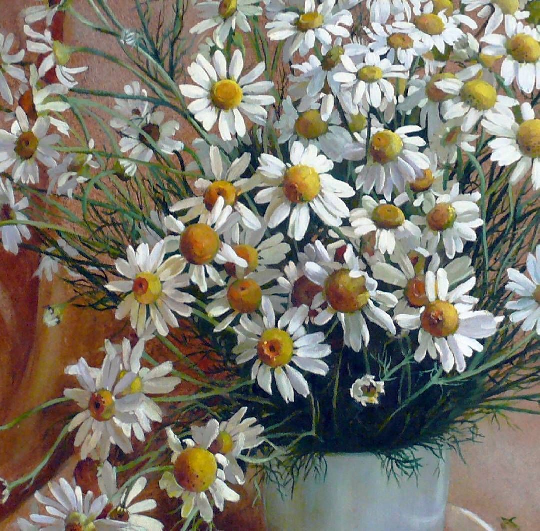 explore daisy margarita flower and more izmirmasajfo