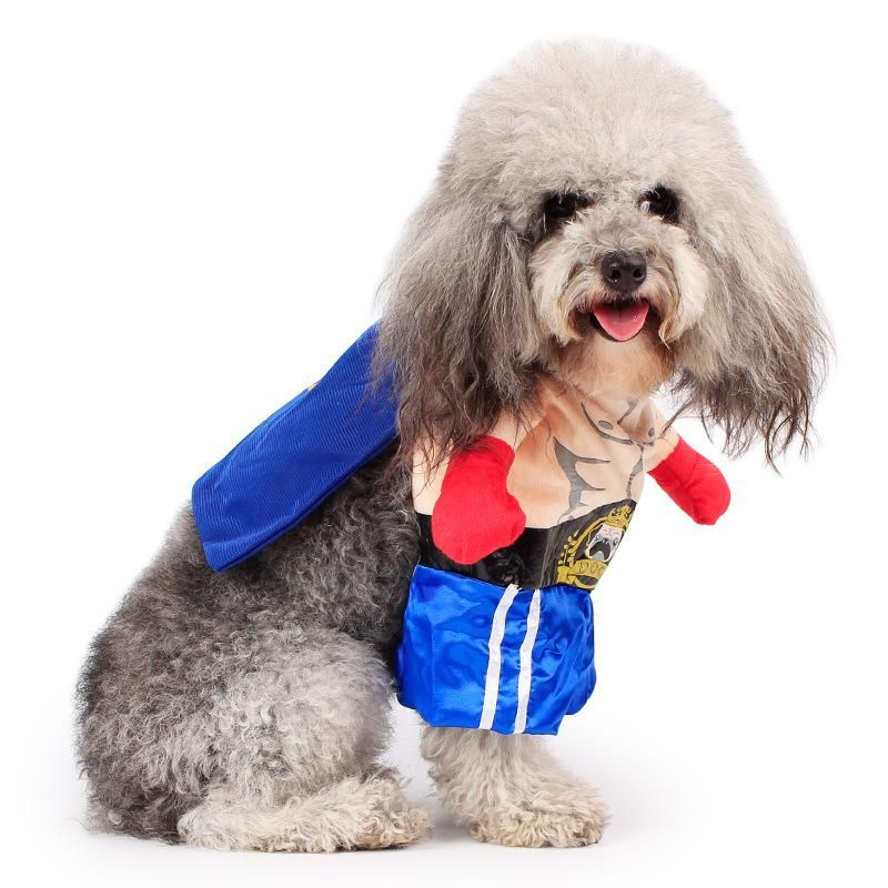 Wbo Boxing Funny Costume Blue Shorts Red Gloves For Dog Funny