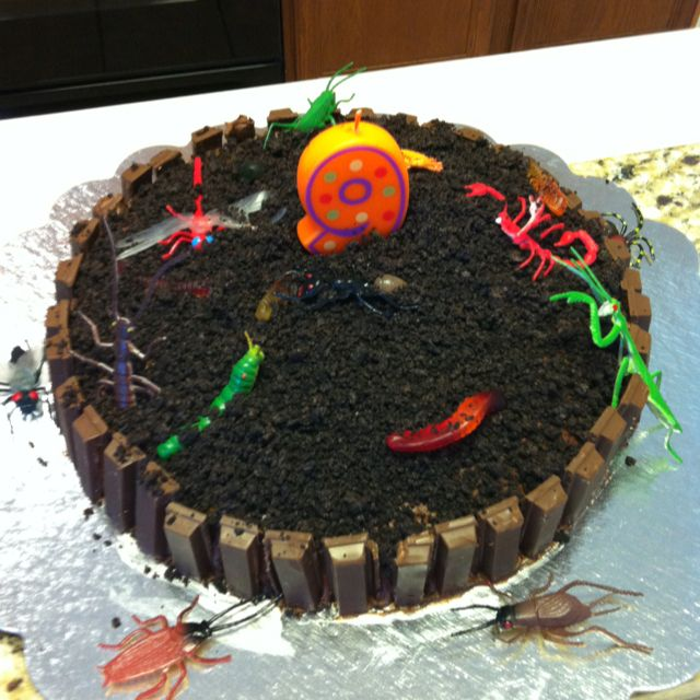 Bug Birthday Cake Kit Kat Fence With Gummy Worms And Crushed