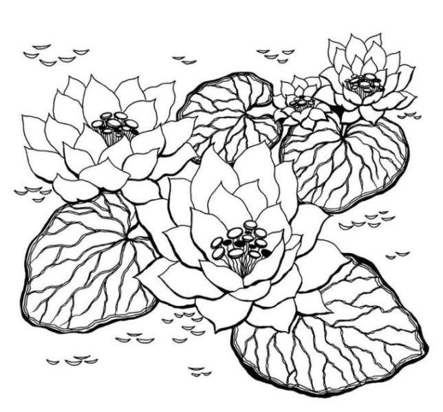 Malvorlagen-Blumen-Ausmalbilder-2.jpg (644×599) | flower coloring ...