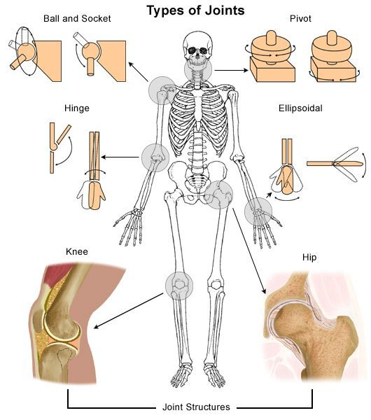 Image Result For Body Joint Sketches Joints In Human Body What Causes Arthritis Body Joints