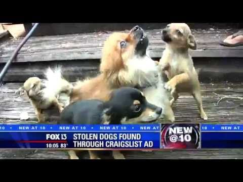 He Bought A Stolen Puppy From Craiglist Will He Return It To The Owner Dogisto Puppies Dogs Animal Abuse